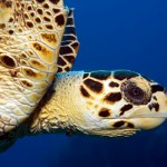 Endangered Marine Turtles on the Menu: Philippine Authorities Promise to Take Action