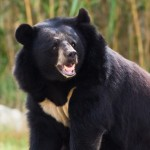 South Korea: 2 Bears Killed After Escaping from 'Farm'