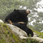 China: 5 Bears Killed, 6 Suspects Arrested
