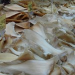 Chinese Netizens Skeptical of Gov't Ban on Shark Fin Soup