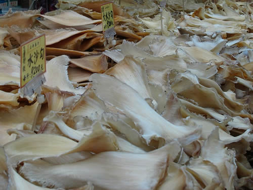 Chinese Netizens Skeptical of Gov't Ban on Shark Fin Soup ...