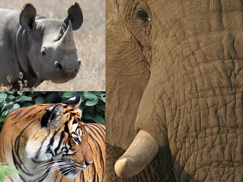 A new report from WWF assesses the efforts of 23 countries to comply with CITES commitments regarding rhinos, tigers, and elephants.