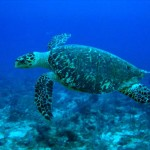 Vietnam: Authorities Seize 50 Slaughtered Sea Turtles