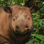 Report Lists 100 of the Most Endangered Species