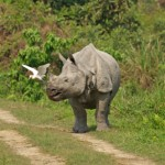 India: Rhino Horn Trafficking Gang Members Nabbed