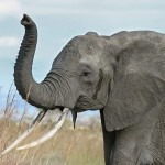 Google Grants $5M to Help Fight Wildlife Trafficking