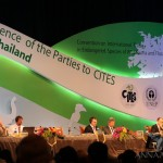 CITES CoP16: Positive Response to 'World Wildlife Day', Less Consensus on Transparency Issues