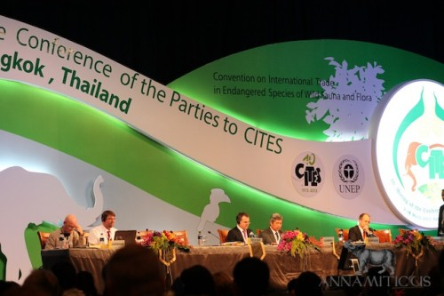 CITES CoP16 is currently in progress in Bangkok, Thailand. Photo © Annamiticus