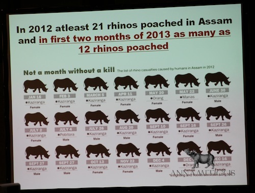at least 12 rhinos had already been killed since the beginning of 2013, as compared to 21 killed during all of 2012
