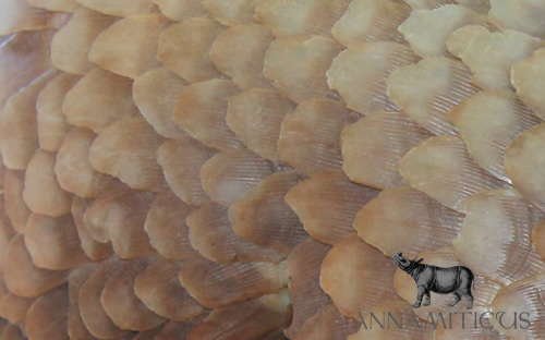 At least 40 of the 104 pangolins recently rescued in Thailand have died. Photo &Copy; Annamiticus