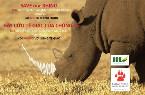 Education for Nature-Vietnam has launched a campaign to stop the consumption of rhino horn.
