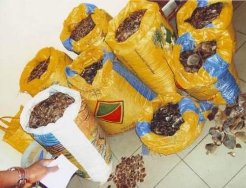 In Cameroon, two suspects were arrested for attempting to smuggle pangolin scales. Photo courtesy of Ofir Drori/LAGA