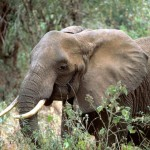 Royals Speak Out Against Wildlife Trafficking