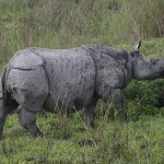 Conservation Volunteer Suspected of Killing Rhino in Manas National Park