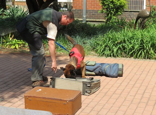 A specially trained dog demonstrates how to find rhino horn hidden in luggage. Photo courtesy of Education for Nature-Vietnam