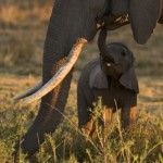 Elephants: The Poster Child for a Failed Experiment