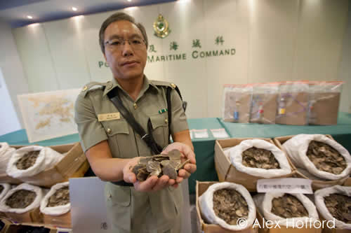 Customs officers in Hong Kong intercepted a haul of 320 kg of pangolin scales. Photo courtesy & © Alex Hofford