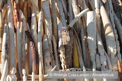 Amid chaos in Africa linked to ivory trafficking, France boldly steps forward to destroy its ivory stocks. Photo © Rhishja Cota-Larson / Annamiticus