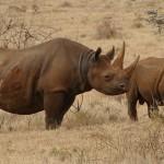 $1.5 Million Black Rhino Horn Seizure in Singapore