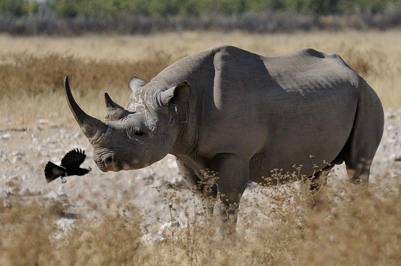 Questionable 'Science' Behind Controversial Rhino Hunt Auction