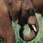 U.N. Security Council Addresses Wildlife Trafficking with DRC Sanctions