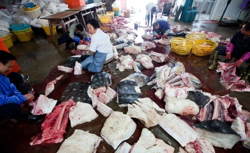 The world's biggest slaughter of whale sharks has been exposed in PuQi, Zhejiang Province, China.