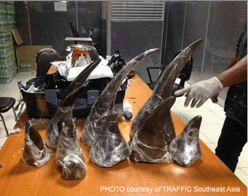 22kg of rhino horns were seized in Singapore and Thailand, in two separate incidents. Both were bound for Vietnam. Photo courtesy of TRAFFIC Southeast Asia