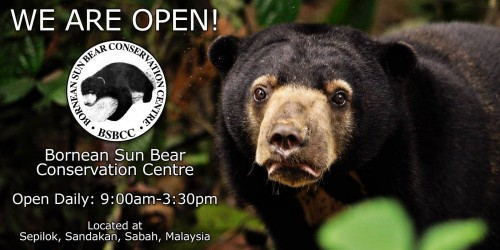 The Bornean Sun Bear Conservation Centre in Sabah, Malaysia, will open to the public on January 17, 2014. Photo: BSBCC