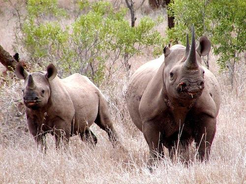 Rhino horn trafficker Michael Slattery Jr. was sentenced to prison in U.S. District Court on January 10, 2014. Photo: Karl Stromayer / USFWS