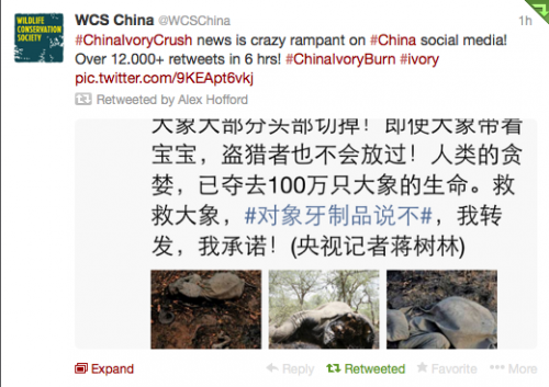 China's ivory event racked up 12,000 shares on its social media platform Weibo.