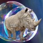South Africa's Rhino Horn Trade Scheme Trounced by Economics