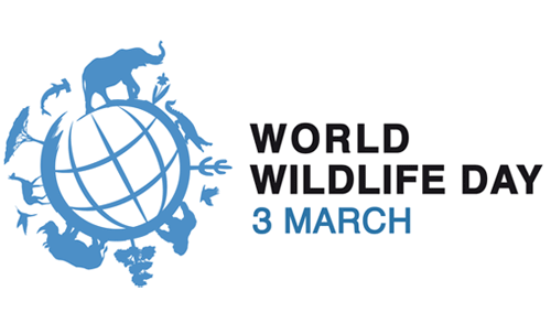 """""""Let's reconnect with our Planet's wild side. Let's go wild for wildlife!"""" says John Scanlon, CITES Secretary-General."""