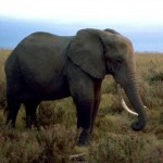 Belgium Will Destroy Ivory Stockpile