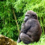 Oil Company To Cease Operations In Virunga National Park, DRC