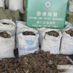 1 Ton of Pangolin Scales from South Africa Seized in Hong Kong