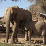 Controversy Grows as First Desert Elephant Shot in Namibia