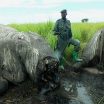 African Parks, ICCN Respond to Elephant Slaughter in Garamba National Park, DRC