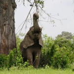 Call for Trade Embargo Against Mozambique for Failure to Address Poaching Issues