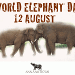 North Carolina Zoo to Destroy Ivory on World Elephant Day, August 12