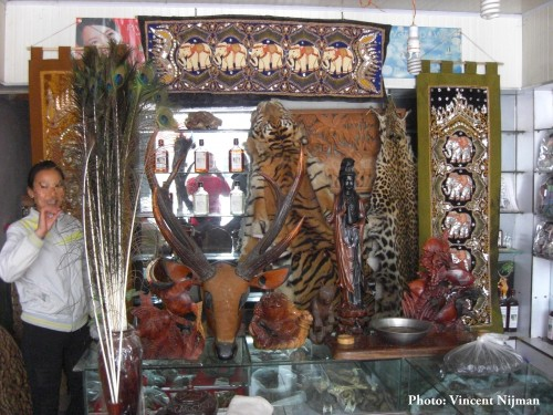 Tiger and Leopard skins, among other wildlife parts, for sale in a shop in Mong La – 2014 PHOTO:  Vincent Nijman / TRAFFIC