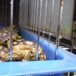 Revealed: Bangkok Market Provides Safe Haven for Illegal Tortoise Trade