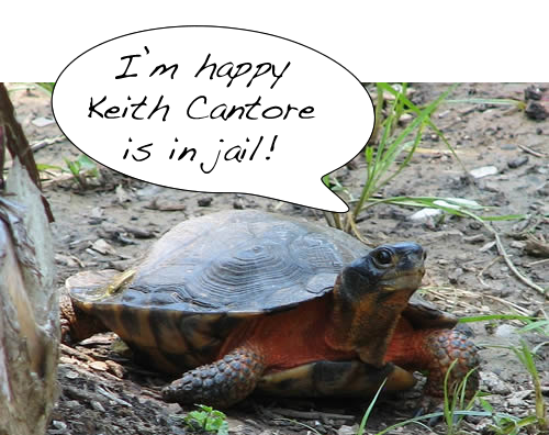 Turtle trafficker Keith Cantore has been sentenced to 41 months in prison and ordered to pay a $41,000 fine. Photo by Ltshears via Wikimedia Commons.