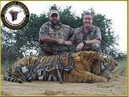 Screenshot of a photo depicting a tiger killed in a bow hunt, which has since been removed from the Gotsoma Safaris gallery.