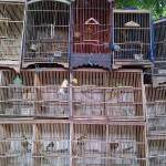 Tens of Thousands of Birds Illegally Sold on the Streets of Jakarta
