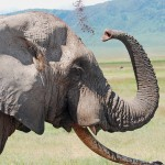 China and the Hunting of Elephants