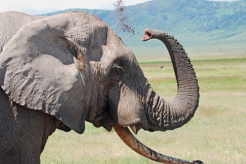 Regarding African elephant trophies, the Chinese CITES Trade Data does not reflect what one might expect at all. Photo by Harvey Barrison via Wikimedia Commons