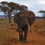 Tanzania's Infamous 'Queen of Ivory' Arrested