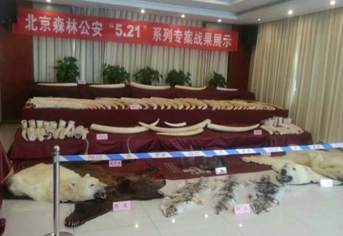 Beijing Forest Police uncovered a wildlife trafficking ring that led from Japan through Hong Kong to mainland China. Photo courtesy of TRAFFIC