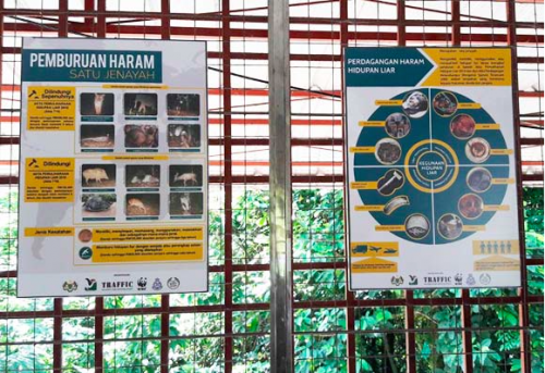 The posters serve as a quick reference to illegal hunting and trade offences under the Wildlife Conservation Act 2010 and International Trade in Endangered Species Act 2008. Photo © TRAFFIC