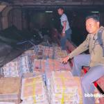 Thousands of Smuggled Birds Seized in East Java Port, One Suspect Arrested